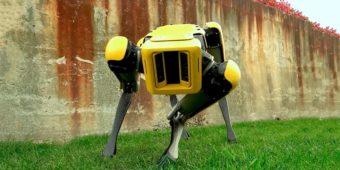 домашний робот пес от Boston Dynamics